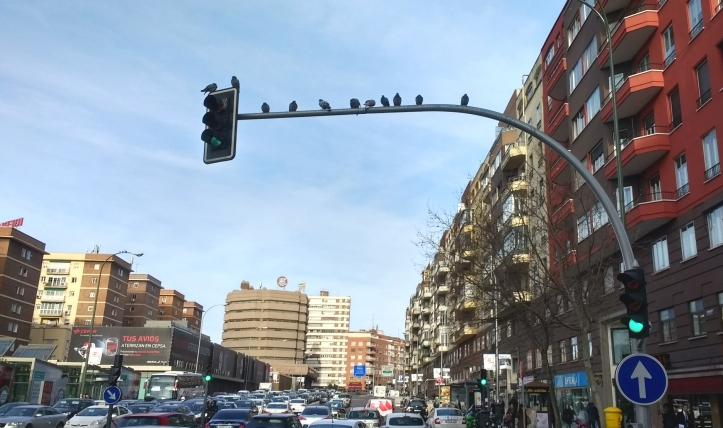 Los pájaros (c) Rau García